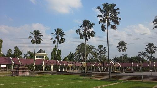 Pohon Palm banyak tumbuh di Halaman Mesjid Agung At-Tin TMII Jakarta (Rabu 17 Agustus 2016)