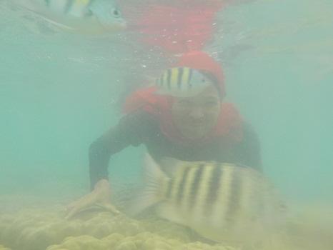 Dokumentasi Foto Snorkeling di Pantai Suwarnadwipa sambil menyaksikan  beraneka ikan hias   (28-12-2015)