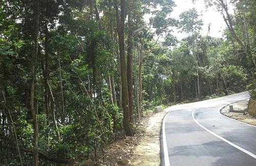Sepanjang jalan Sabang-Tugu Kilometer Nol ditumbuhi barisan pepohonan hijau dan rindang, sehingga membuat sejuk mata memandangnya (Sabang Pulau Weh, Kamis, 29 Desember 2016)